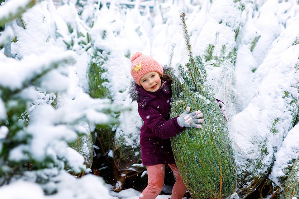 Weihnachtsbaumplantage in Wilhelmsdorf bei Pößneck